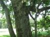interesting-tree